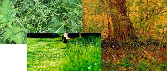 Tipo de hierba y vegetación que se puede cortar con un desbrozador
